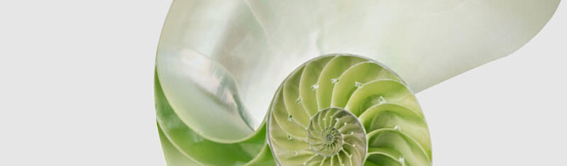 whitepaper-shell-bg-08