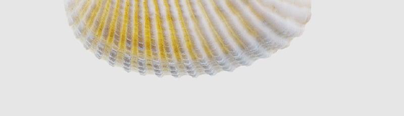 whitepaper-shell-bg-09-bottom