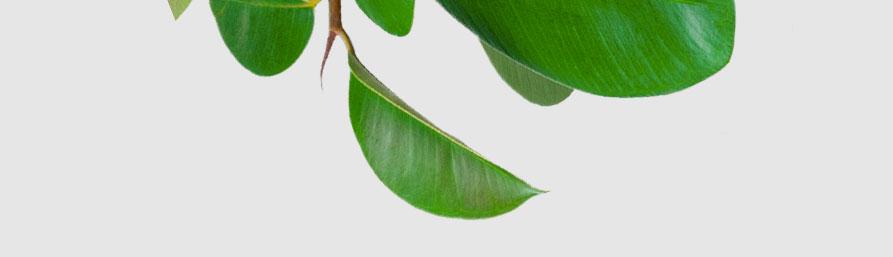whitepaper-plant-bg-10-bottom