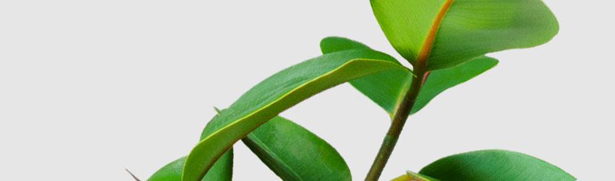 whitepaper-plant-bg-10